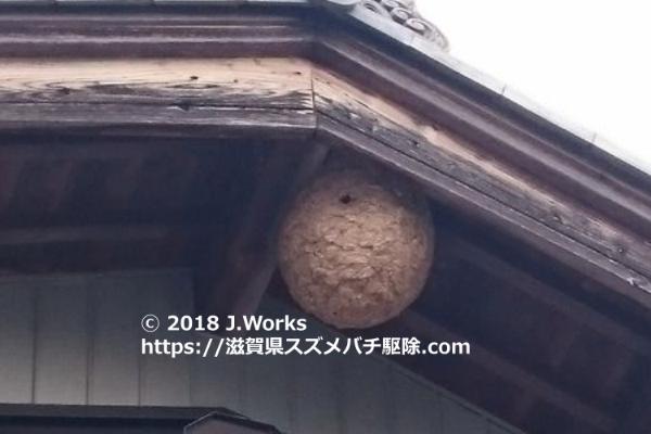 東近江市スズメバチの巣画像