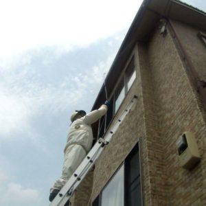 高所のスズメバチの巣駆除画像ジェイ・ワークス